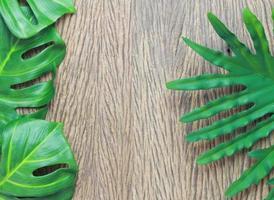 folhas de filodendro e monstera foto