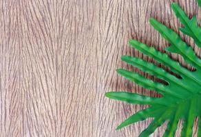 folha de filodendro tropical em madeira foto