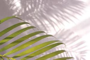folhas de palmeira e sombras na parede foto