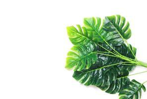 grupo de folhas de palmeira monstera foto