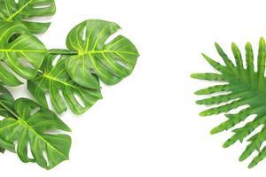 folhas de palmeira filodendro tropical e monstera foto