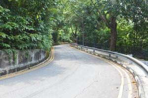 estrada com árvores foto