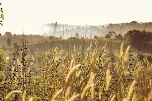 lindo campo gramado na hora dourada foto