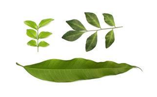 coleção folhagem verde tropical