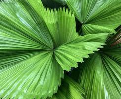 grupo de folhas tropicais brilhantes