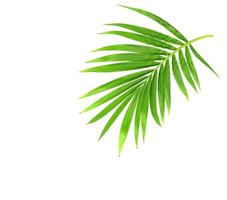 ramo verde vibrante