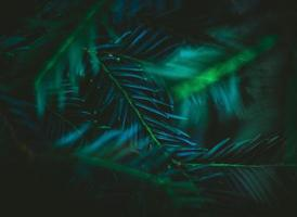 folhas verdes profundas