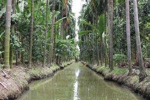 riacho em uma selva