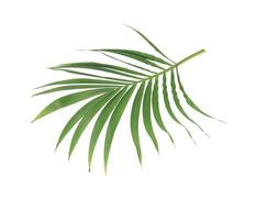 ramo de folha verde vibrante