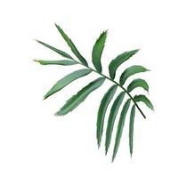 folhas verdes de uma planta tropical