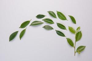 folhas em fundo branco foto