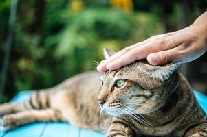 mão acariciando a cabeça de um gato foto