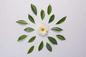 flor e folhas no fundo branco foto