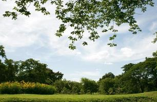 céu azul sobre um gramado verde