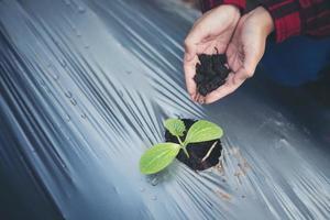 mão de uma jovem plantando uma árvore jovem em solo negro foto