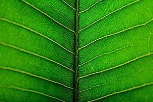 close-up de folha verde foto