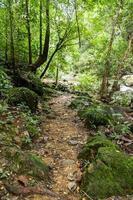 floresta abundante na tailândia foto