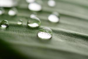 muitas gotas de água nas folhas de bananeira foto