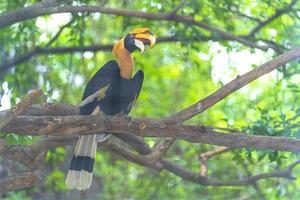 pássaro calau em uma floresta foto