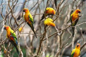 papagaios conure sol em galhos de árvores