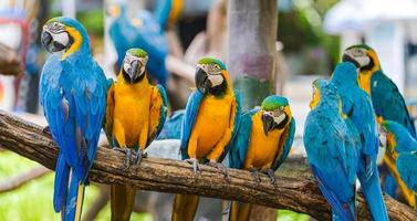 papagaios de arara em galhos de árvores
