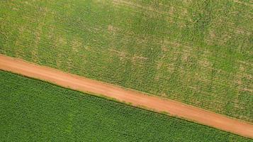 vista aérea de um campo de milho