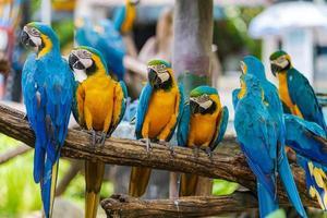 grupo de papagaios de arara nos galhos