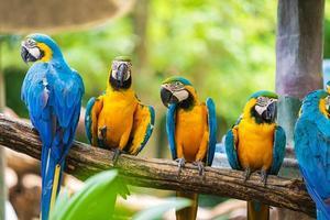 grupo de araras coloridas em galhos de árvores