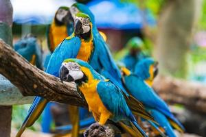 grupo de papagaios arara