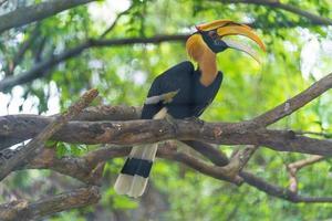 pássaro calau em árvore foto