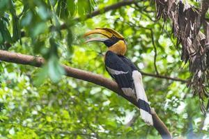 pássaro calau empoleirado em árvore foto