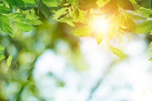 fundo verde da natureza com brilho do sol foto