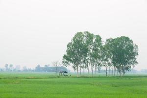 casa no campo de arroz foto