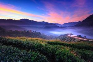 névoa matinal no terraço do chá em doi angkhang em chiangmai, tailândia