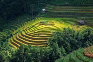 terraço campo de arroz em mu cang jai, vietnã