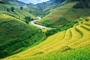 terraço campo de arroz em mu cang jai, vietnã foto