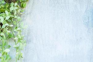 fundo de madeira branco com folhas foto