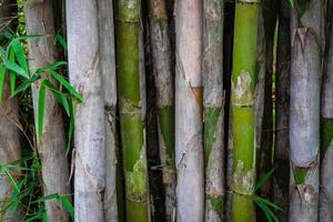 fundo de bambu natural foto