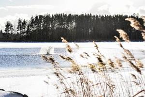 um lago parcialmente congelado com uma fonte de aeração e folhas de grama foto