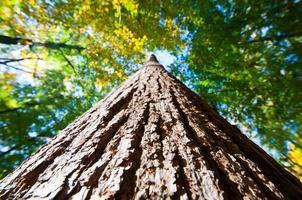olhando para uma árvore foto