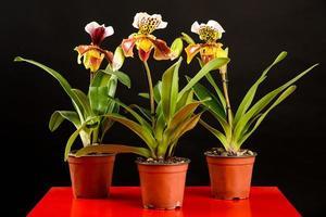 um trio de flores de orquídea em vasos
