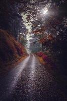estrada florestal em bilbao, espanha
