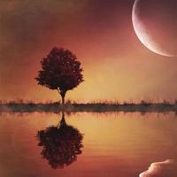 reflexão de árvore com grande lua composta foto