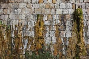 musgo e água caindo de uma parede
