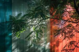 ramos verdes sobre uma fachada envidraçada