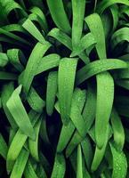 grama verde com orvalho foto
