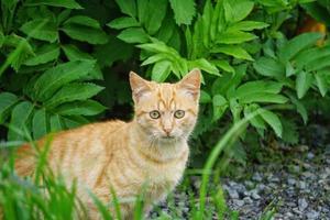 retrato de gato vadio foto