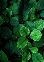 folhas verdes da planta na natureza foto