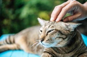 mão acariciando um gato malhado