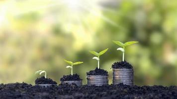 moedas e plantas são cultivadas em uma pilha de moedas para finanças e bancos. a ideia de economizar dinheiro e aumentar as finanças